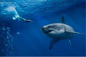 Фото бесплатно море, акула, девушка