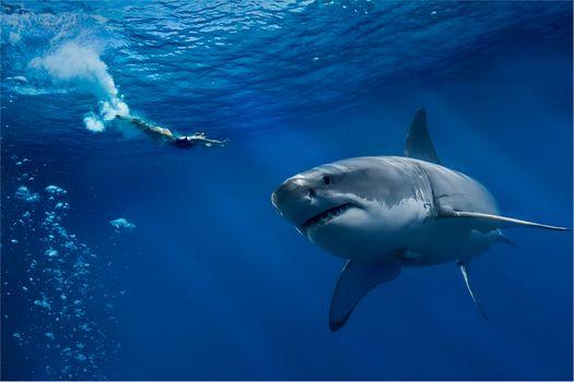 Photo free sea, danger, shark