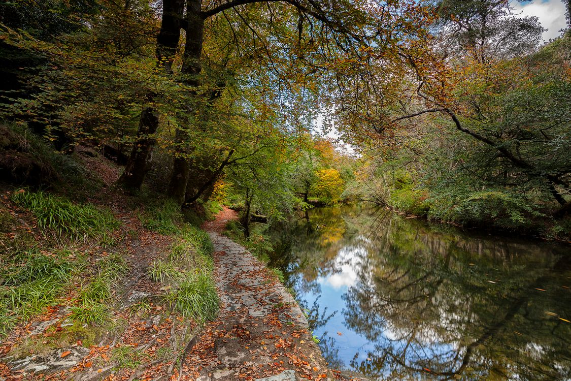 Photos for free footpath, pond, river - to the desktop