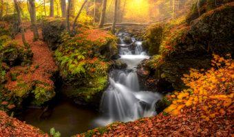 Фото бесплатно краски осени, осенние краски, деревья