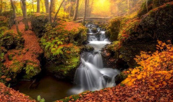 Photo free paints of autumn, autumn paints, trees