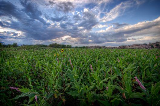 Photo free Arizona, field, plant