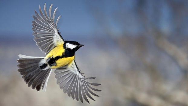 Photo free birds, tit, flies