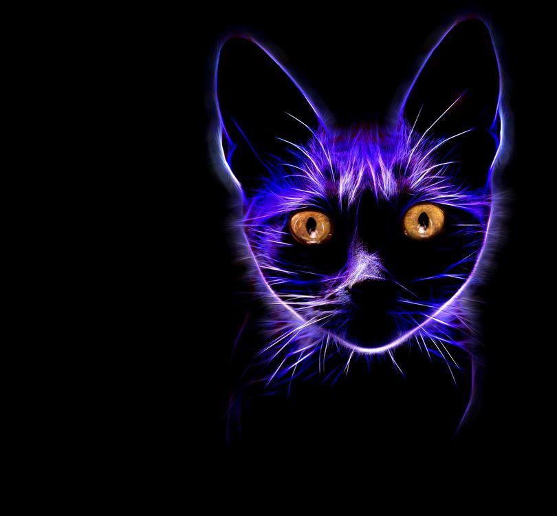 Фото бесплатно кот, кошка, морда, чёрный фон, абстракция, 3d графика