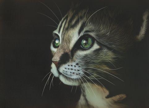 Нарисованное лицо кота