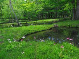 Заставки пруд, цветы, река