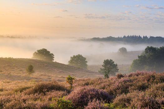 Бесплатные фото рассвет,поле,лаванда,лавандовое поле,небо,природа,дерево,пейзаж,Гельдерланд,Нидерланды