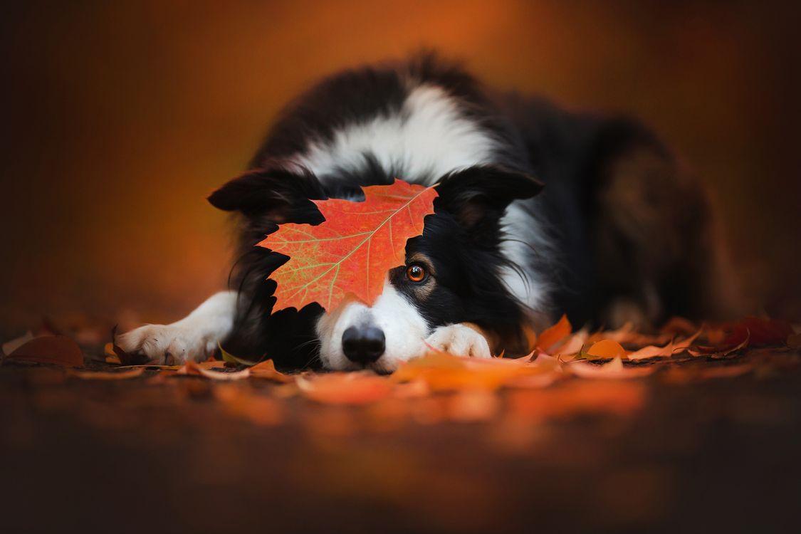 Ноябрь на собаку · бесплатная заставка