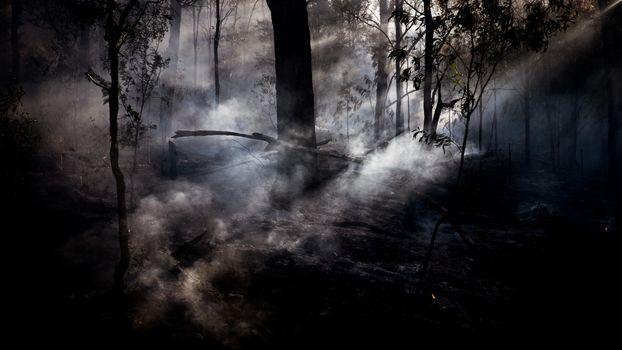 Photo free sunbeam, dark forest, trees