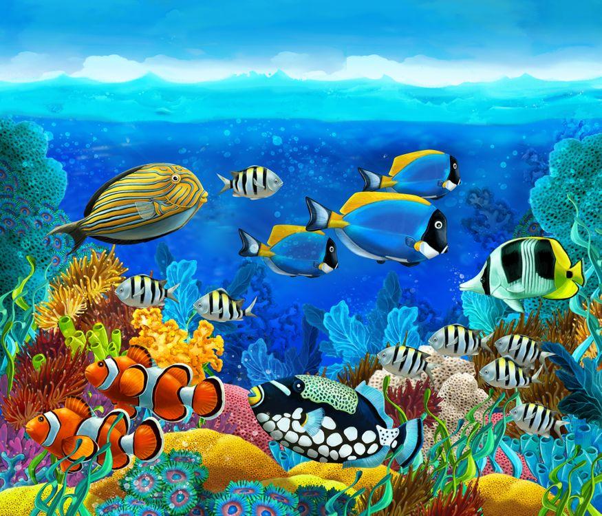 Обои море, рифы, рыбы картинки на телефон