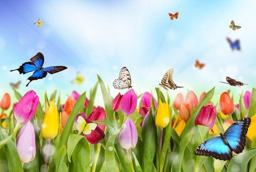Бесплатные фото цветы,тюльпаны,бабочки,флора