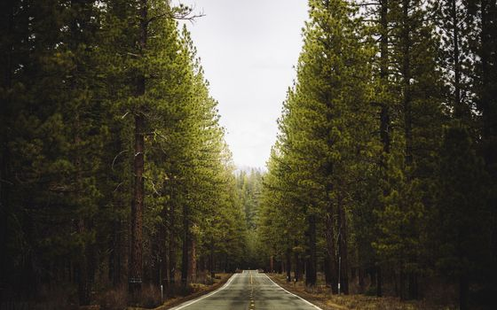 Photo free forest, landscape, landscapes