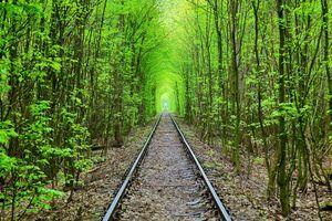 Бесплатные фото Green Tunnel,зелёный тоннель,лес,деревья,железная дорога,пейзаж