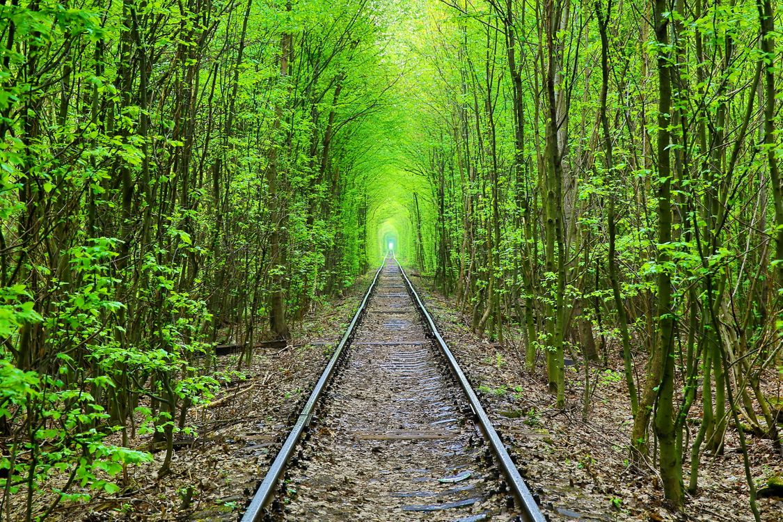 Free photo Green Tunnel green tunnel, forest, trees - to desktop