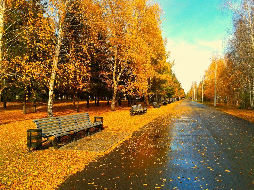 Фото бесплатно листва, парк, листья - на рабочий стол