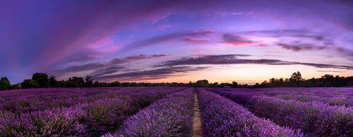 Фото бесплатно пейзаж, лаванды, небо
