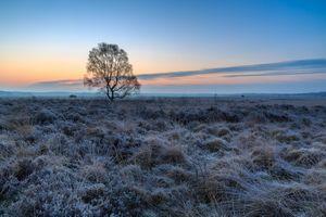 Бесплатные фото закат,поле,лаванда,лавандовое поле,небо,природа,дерево