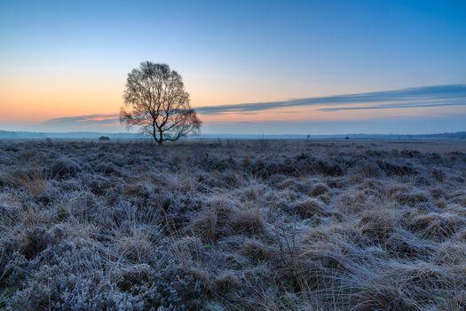 Бесплатные фото закат,поле,лаванда,лавандовое поле,небо,природа,дерево,пейзаж,Гельдерланд,Нидерланды