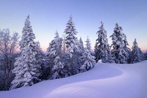 Бесплатные фото Alpes,Швейцария,зима,снег,деревья,сугробы,природа