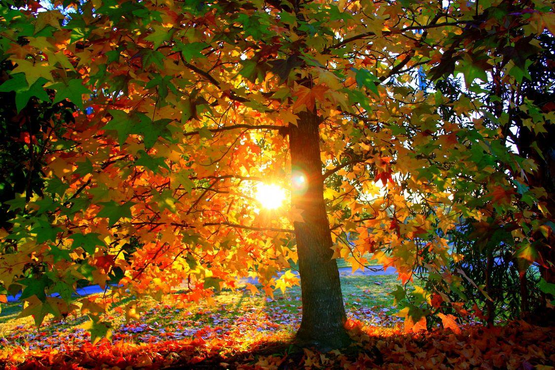 Обои осень, лес, времена года картинки на телефон