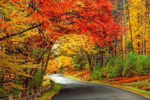 Фото бесплатно красивая осень, дорога, лес
