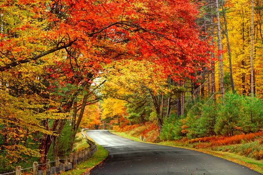 Photo free beautiful autumn, road, forest