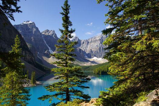 Озеро в лесу сквозь ветки ели