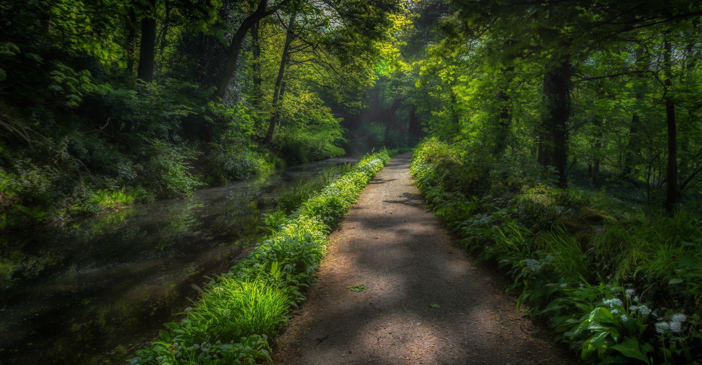 Фото бесплатно пруд, природа, канал - на рабочий стол