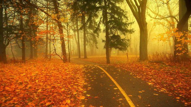 Заставки туман, осенние листья, парк