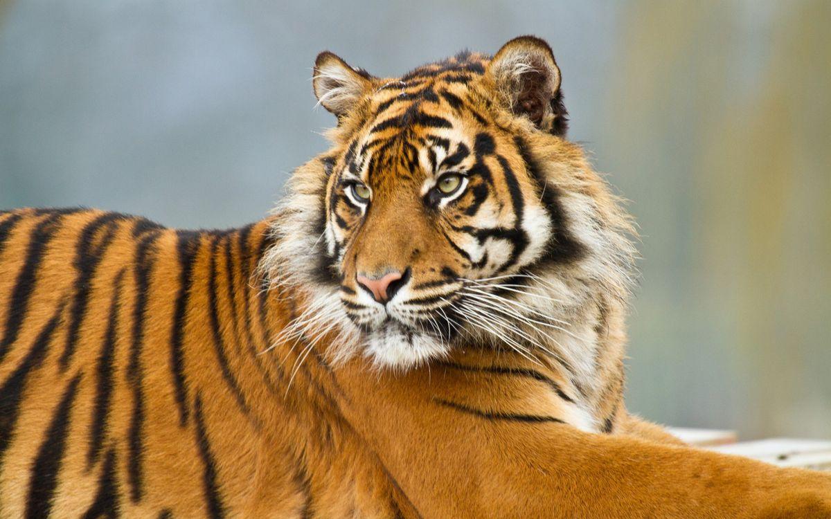 Усатый тигр, милашка · бесплатное фото