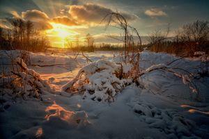 Фото бесплатно природа, деревья, солнце
