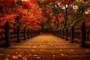 Заставки мост, аллея, прогулка