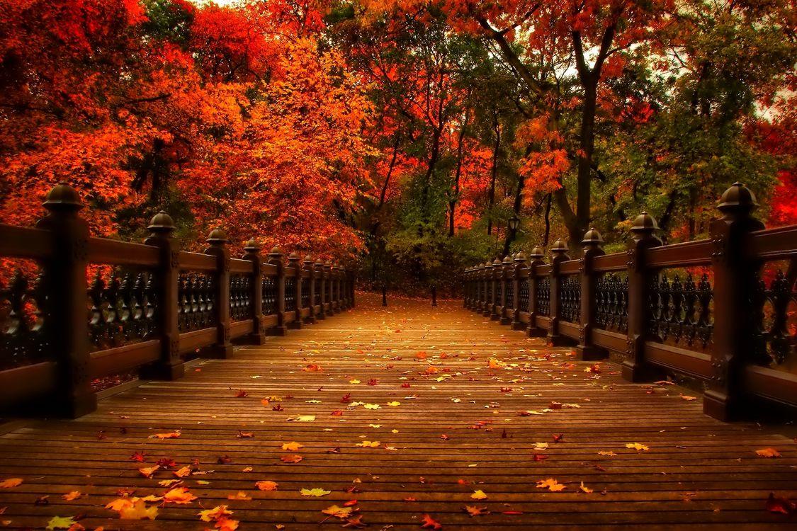 Фото бесплатно мост, аллея, прогулка - на рабочий стол