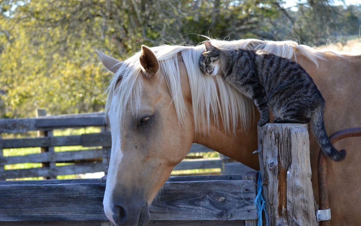 Фото бесплатно кошка, дружба, лошадь - на рабочий стол