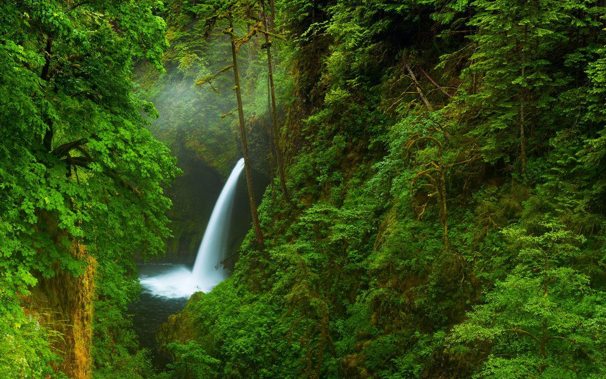 Водопад в глухом лесу · бесплатное фото