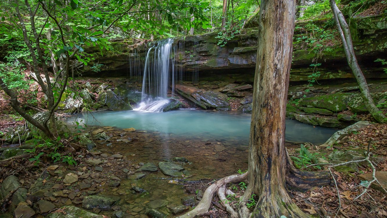 Обои лес деревья, скалы, водопад картинки на телефон