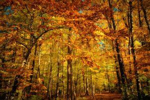 Бесплатные фото осень,лес,деревья,листва,осенние краски,дорога,природа