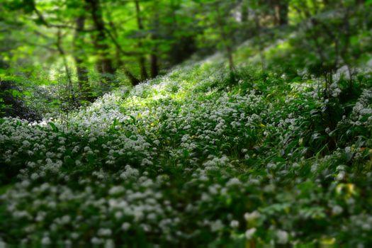 Фото бесплатно глубина, поле, флора