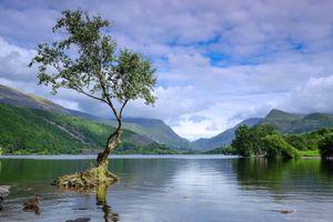 Бесплатные фото Ллин Падарн,Llanberis,Северный Уэльс,озеро,вода,дерево,Lonetree горы