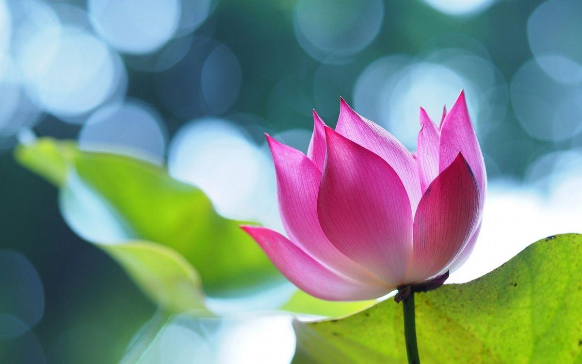 Photos for free macro, purple flower, petals - to the desktop