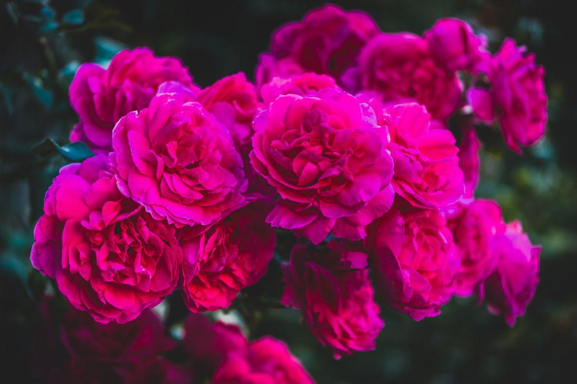 Не рви цветы · бесплатное фото