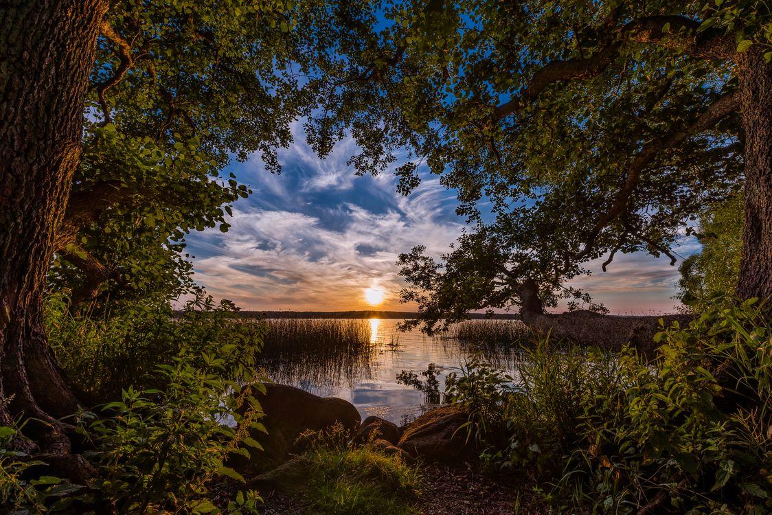 Фото бесплатно sunset, reflection, trees, lake, Sorup, Denmark, пейзажи