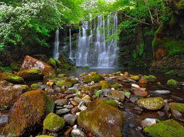 Бесплатные фото водопад,скалы,камни,лес,деревья,природа,пейзаж
