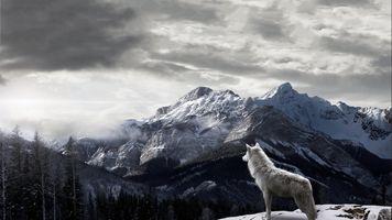 Фото бесплатно гора, волк, пейзаж