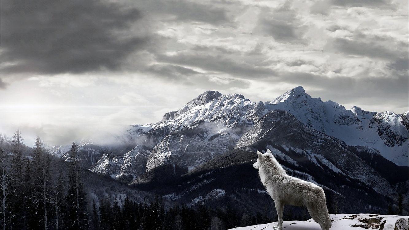 Фото бесплатно гора, волк, пейзаж - на рабочий стол