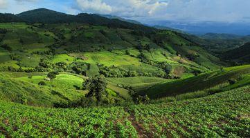 Фото бесплатно Ban Papongpieng, бескрайние просторы, зеленые поля