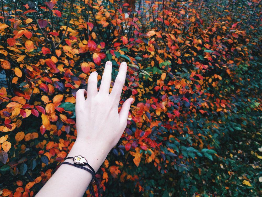Фото бесплатно лес, листья, руки - на рабочий стол