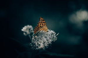 Бесплатные фото бабочка,цветок,крылья,макро