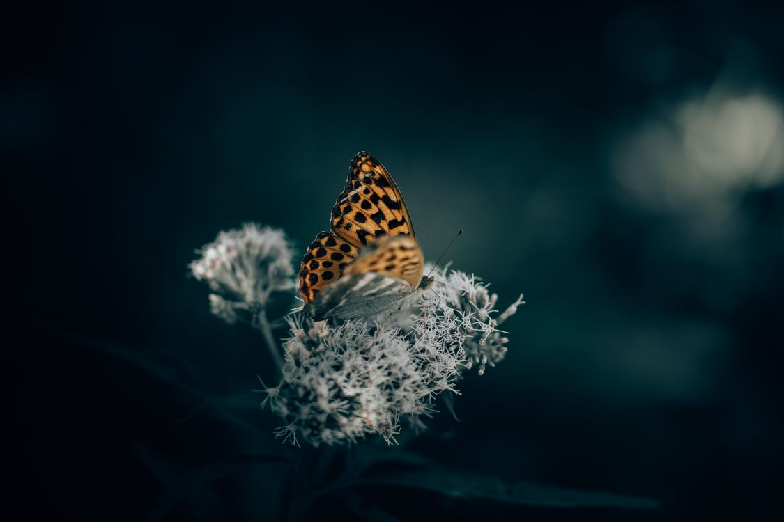 Фото бесплатно бабочка, цветок, крылья, макро, насекомые