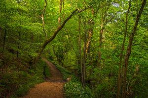 Заставки пейзаж, путь, деревья